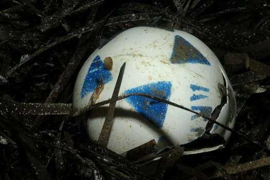Discarded Football - Mediterranean 2006