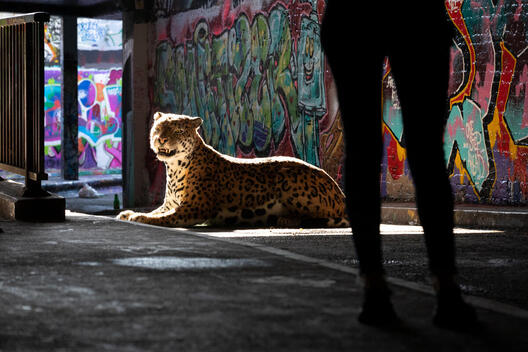 Activists Unleash Big Cat onto the Streets of London