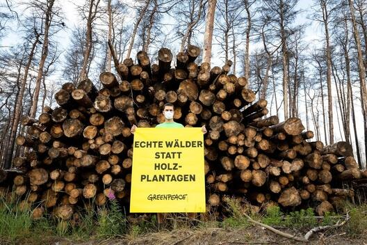Protest for Better Forest Management in Brandenburg