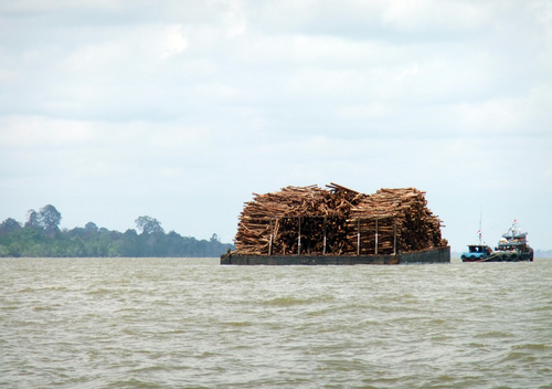 Logs Transported by Barge from the Island of Pulau Pedang