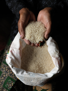 Ecological Rice in Cambodia