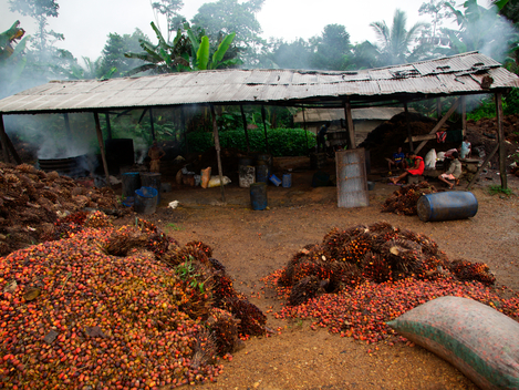 Small Scale Oil Palm Processing in Cameroon