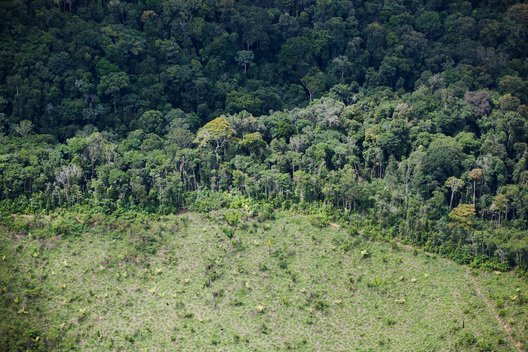 Deforested Area in the Amazon