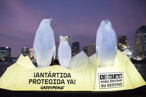 Papercraft penguins arrive to Buenos Aires