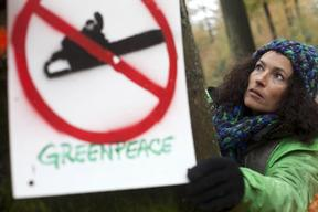 Action against Beech Tree Logging in Germany