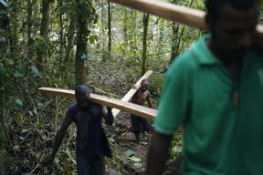 Awane Community Forestry Project in Papua New Guinea