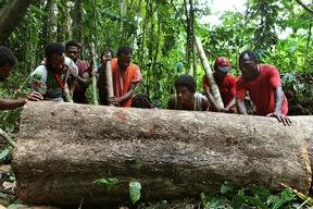 Tavolo Community Forest in Papua New Guinea
