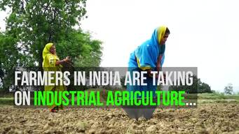 Sustainable Farmers in Kedia, India - Web Video