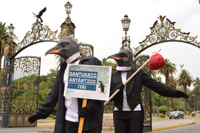 Rise of the Penguins in Mendoza