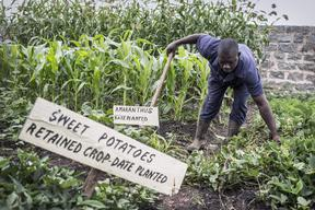Organic farming in Kenya