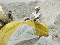 Cotton Farmers in India
