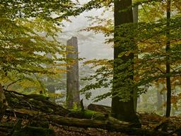 Beech Forests in the Spessart Mountains
