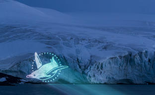 Penguin Projection on Glacier in the Antarctic