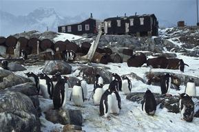 Penguins at Port  Lockroy