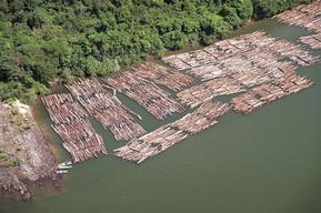 Illegal Mahogany logs by Kayapo land, Brazil.