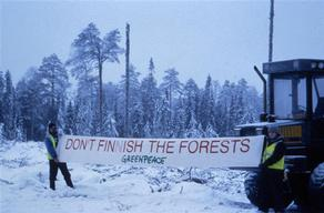 Greenpeace protest against logging in old-growth forests.