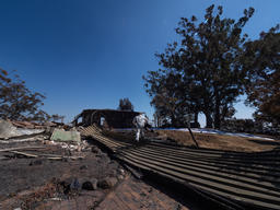 Destruction Caused by Bushfire in Binna Burra, Queensland