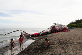Whale Art Installation in the Philippines