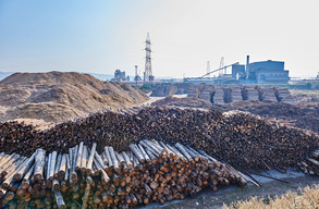 Romanian Timber Industry
