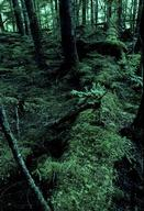 Temperate rainforest. British Columbia, Canada.