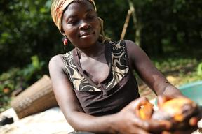 Cocoa Farming in Cameroon
