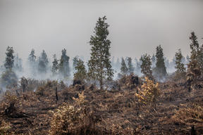 Forest Fires at PT GAL Concession in Central Kalimantan