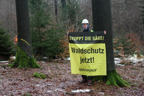 Action against Logging of Forest in Germany