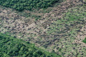 Deforestation for Farming and Agriculture in Chaco Province, Argentina