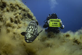 Underwater Banner at Elba Island