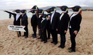 Rise of the Penguins in Mallorca, Spain