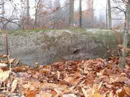 Beech Logs in the Spessart Mountains.