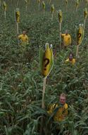 GE Protest against EU Seed Directive in Germany