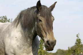 Horse at Animal Park Arche Warder in Germany
