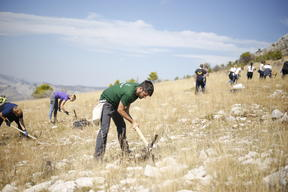 Reforestation Activity in Croatia