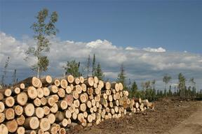 Boreal Forest Destruction in Canada