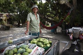 Mango Farmer in Rayong Province in Thailand