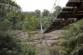Korup National Park in Cameroon