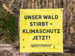 Aerials of Activists Protesting for Better Forest Management in Germany