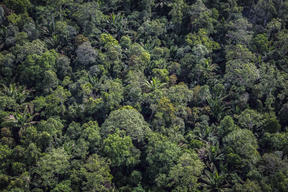 Forest in Southern Papua