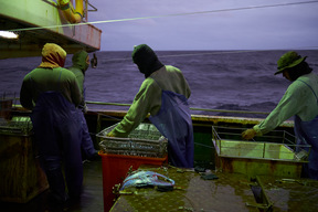 Fishers on Longline Fishing Vessel in the Pacific Ocean