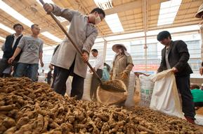 Panax Pseudoginseng at Market in Yunnan