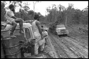 Logging at Papua New Guinea