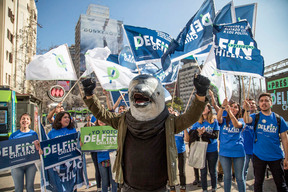 """Dolphin Runs for President"" Activity in Chile"