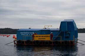 Action at Marine Harvest Salmon Farm in Chilean Sea