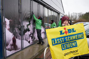 Protest against Lidl's Cheap Meat Policy in Potsdam