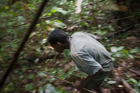 Pygmy Man Hunts in the Forest in Cameroon