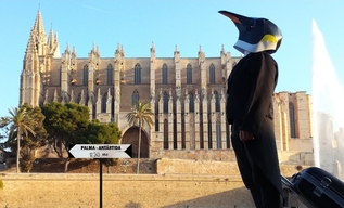 Rise of the Penguins in Mallorca
