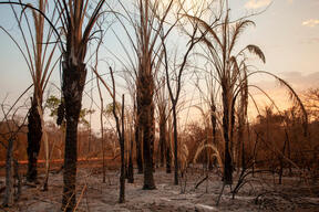Aftermath of Fires in Pantanal, Brazil