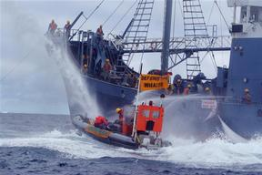 Whaling action - Southern Ocean