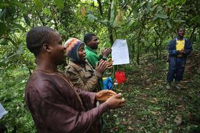 Farmers Field School in Cameroon